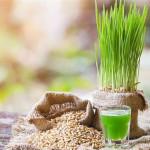 Ростки пшеницы, ржи, подсолнуха – в чём их польза?